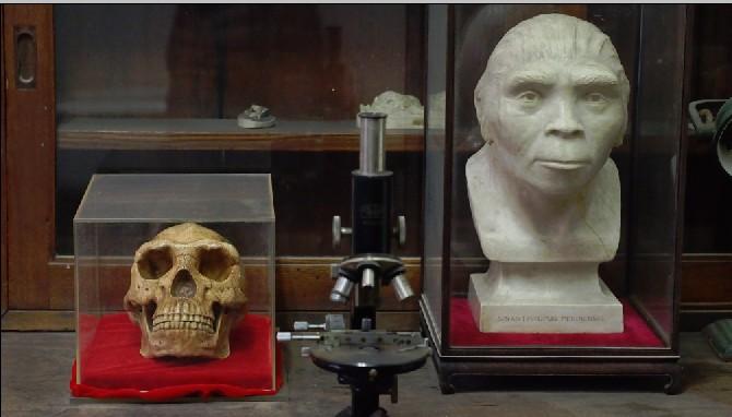 北京人头盖骨复制品及头部复原像